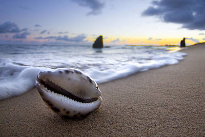 Sea Shell Photograph - Cowrie Sunrise by Sean Davey