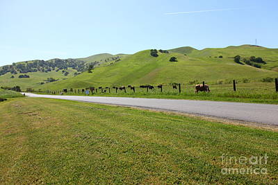 Photograph - Cows Along The Rolling Hills Landscape Of The Black Diamond Mines In Antioch California 5d22326 by Wingsdomain Art and Photography