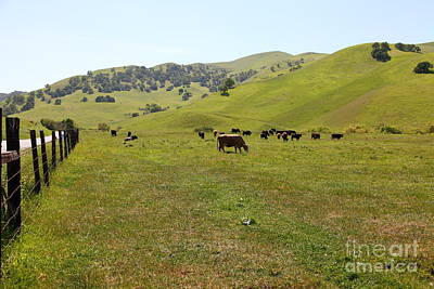 Photograph - Cows Along The Rolling Hills Landscape Of The Black Diamond Mines In Antioch California 5d22327 by Wingsdomain Art and Photography