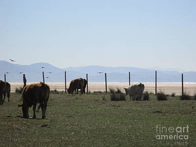 Photograph - Cows And Birds In Tarifa by Chani Demuijlder