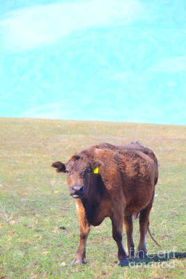 Photograph - Cows Are Great #2 by Donna Munro