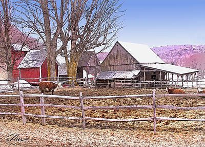 Digital Art - Cows At Jenne Farm by Nancy Griswold