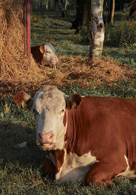 Cows At Work 2 Art Print by Odd Jeppesen