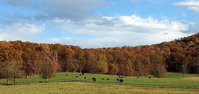 Photograph - Cows Grazing by Cathy Shiflett