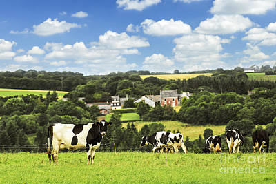 Cows In A Pasture In Brittany Art Print by Elena Elisseeva