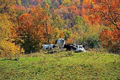 Farm Scene Photograph - Cows In Autumn by Heather Allen