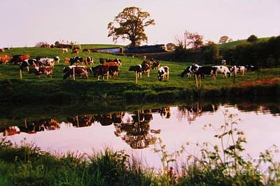 Cows In The Canal Art Print