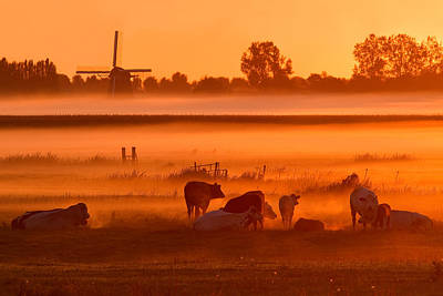 Nederland Photograph - Cows In The Mist by Roeselien Raimond