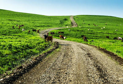 Cows On The Road Art Print
