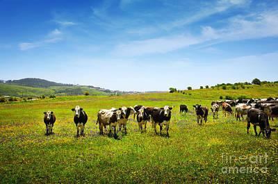 Photograph - Cows Pasturing by Carlos Caetano
