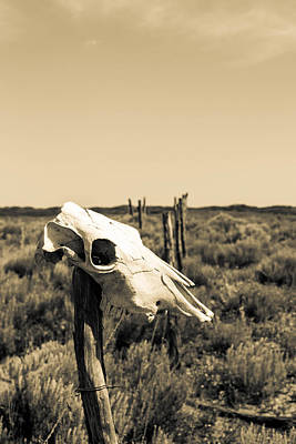 Photograph - Cow's Skull On Fence by Nathan Hillis