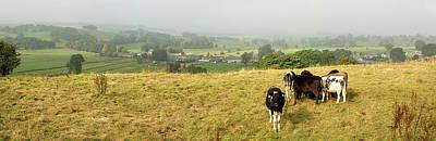 Photograph - Cows by Steve Fedun