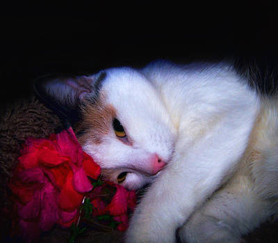Cat Photograph - Coy by Camille Lopez