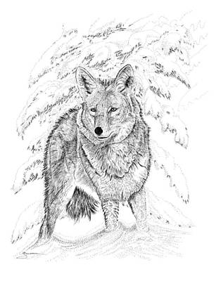 Drawing - Coyote by Carl Genovese