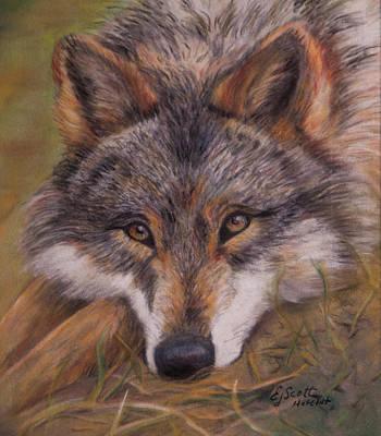 Elizabeth Scott Painting - Coyote Eyes by Elizabeth Scott