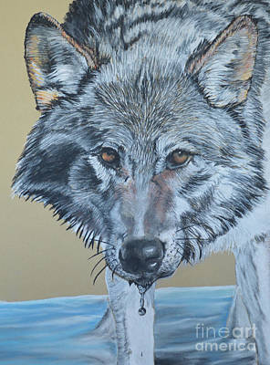 Pastel - Coyote In Water by Ann Marie Chaffin