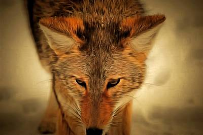 Coyote Art Print by Levi Saunders