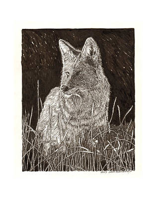 Animals In Wild Drawing - Coyote Night Hunting by Jack Pumphrey