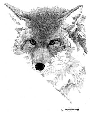 Wall Art - Drawing - Coyote by Paul Shafranski