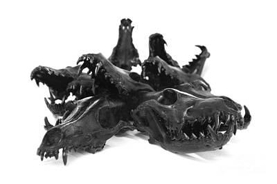 Coyote Skulls Set 1 Art Print