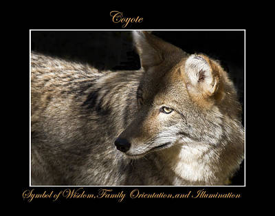 Photograph - Coyote Symbol Of by Marty Maynard