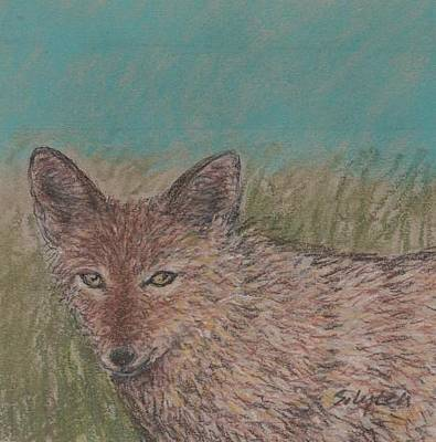 Drawing - Coyote Under Blue Skies by Sandra Lytch