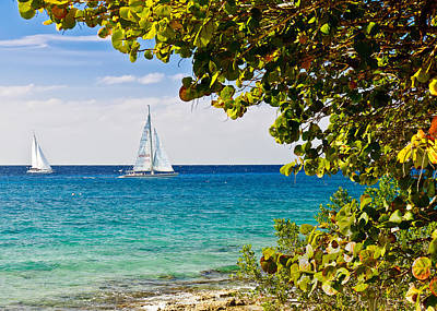 Print featuring the photograph Cozumel Sailboats by Mitchell R Grosky