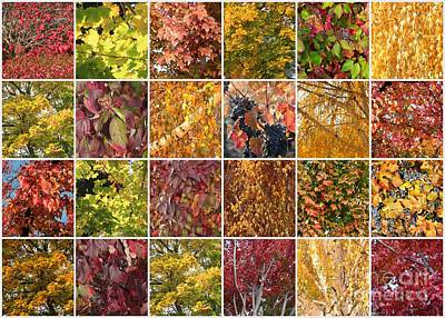 Cozy Autumn Leaves Collage Print by Carol Groenen