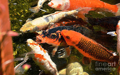 Photograph - Cozy Koi by Susan Wiedmann