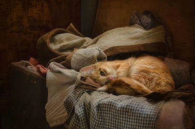 Photograph - Cozy by Robin-Lee Vieira