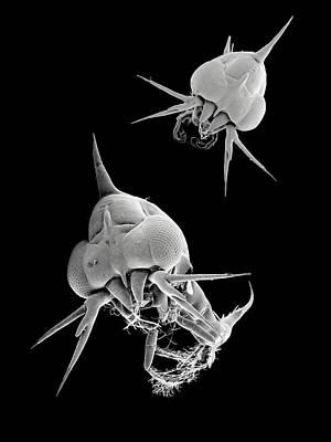 Crab Larvae Art Print