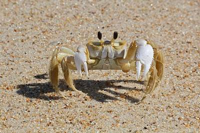 Crab On Sand Art Print by David Wells / Eyeem