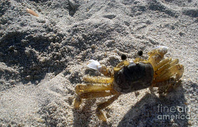 Photograph - Crab On The Look-out by Megan Dirsa-DuBois