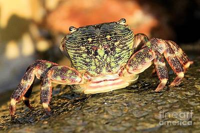 Photograph - Crab On The Rocks by Adam Jewell