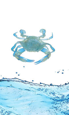Crab Strolling Around Art Print by Art Spectrum