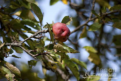 Photograph - Apple 20121020_153 by Tina Hopkins