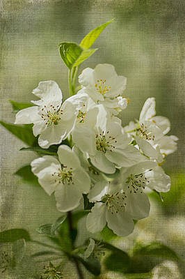 Photograph - Crabapple Blossoms 1 by Wayne Meyer