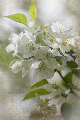 Photograph - Crabapple Blossoms 2 by Wayne Meyer