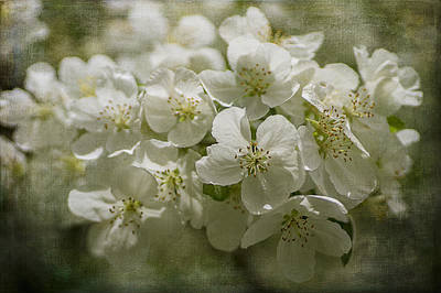 Photograph - Crabapple Blossoms 3 by Wayne Meyer