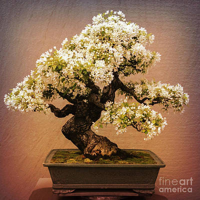 Photograph - Crabapple Bonsai by Chris Scroggins