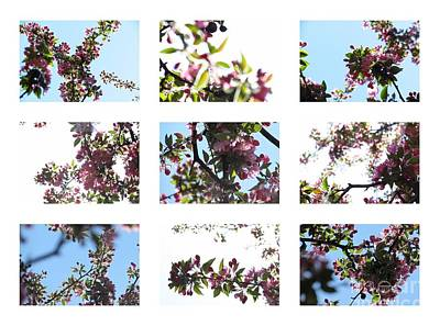 Photograph - Crabapple Collage by France Laliberte