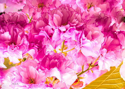 Royalty-Free and Rights-Managed Images - Crabapple Impressions 2 by Bob Orsillo