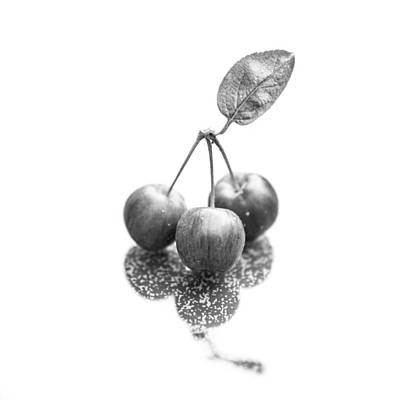 Photograph - Crabapple Monochrome by Semmick Photo