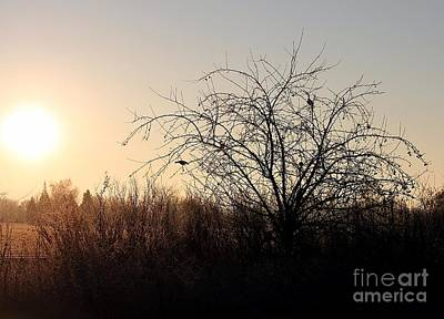 Photograph - Crabapple Morning by Erica Hanel