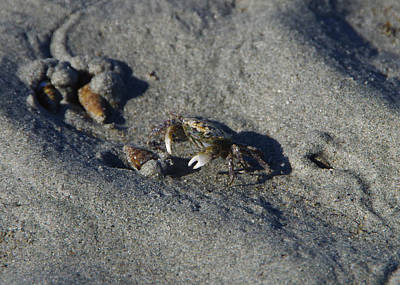 Photograph - Crabby by Marilyn Wilson