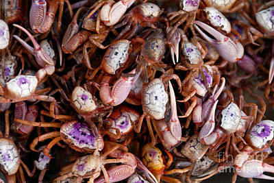 A Lot Photograph - Crabs by Amy Cicconi