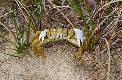 Photograph - Crabs Walk Sideways by John Haldane