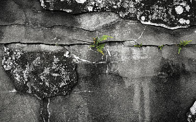 Crack Of Life Art Print