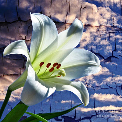 Photograph - Cracked Paint Easter Lily by Marjorie Imbeau