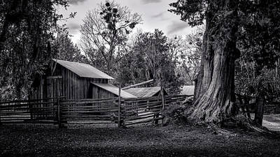 Cracker Barn And Gnarled Southern Red Cedar Art Print